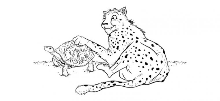 Aste the slowest Cheetah